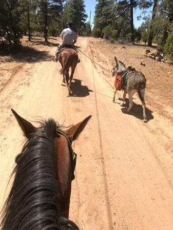 2 Donkeys Saddle Packs and Panniers
