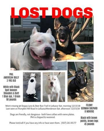 Dogs For Sale in Cuero Texas Craigslist Dogs For Sale