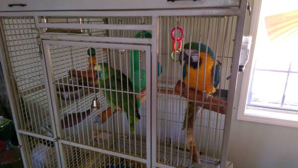Parrots, Blue and Gold Mecaw and Blue front Parrot plus cage