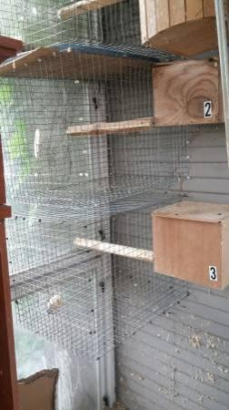 parrot breeding cages